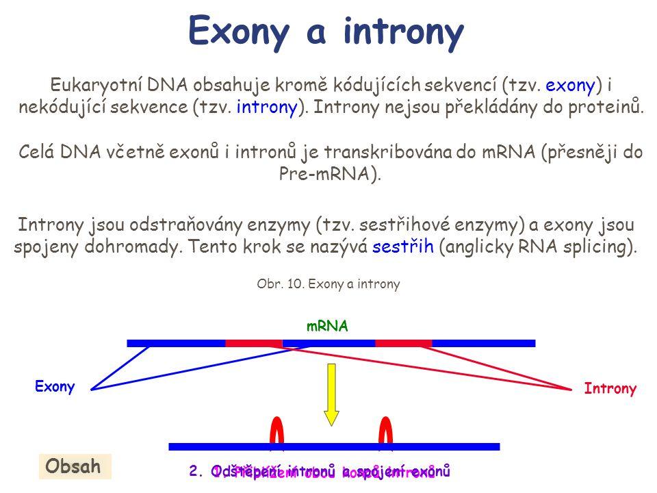 Exony a introny Eukaryotní DNA obsahuje kromě kódujících sekvencí (tzv. exony) i nekódující sekvence (tzv. introny). Introny nejsou překládány do prot