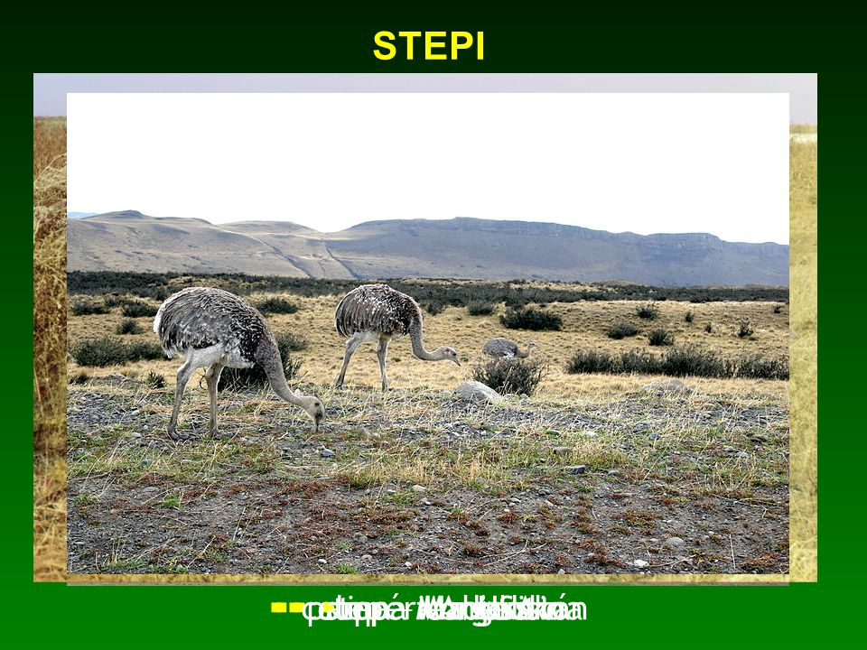 STEPI  step – Maďarsko  step – Mongolsko  celina – Uzbekistán  prérie – USA  pampa - Argentina