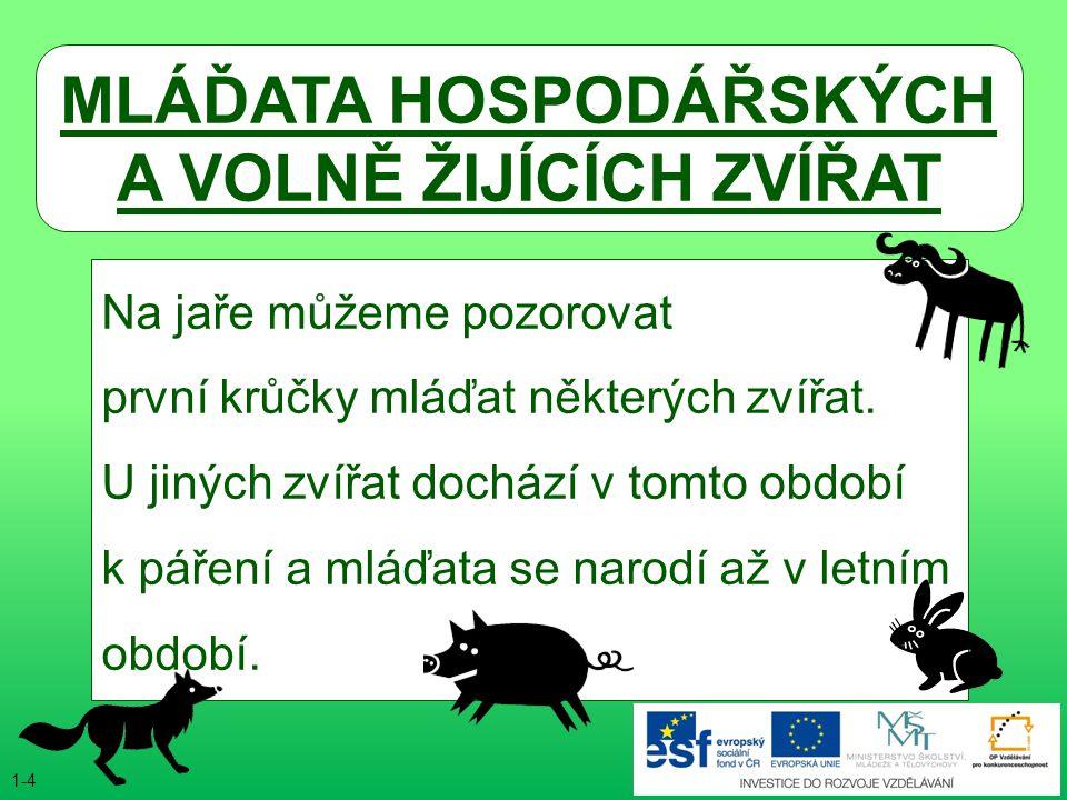 ● rodiče: husa, houser ● líhnutí asi po 28-30 dnech ● váha po vylíhnutí asi 90-100g HOUSE dospělý jedinec 25 24 23