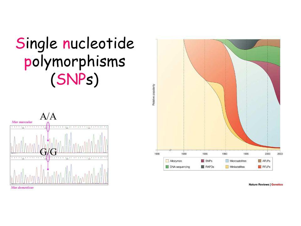 SNPs : nuclear genome (consensus)