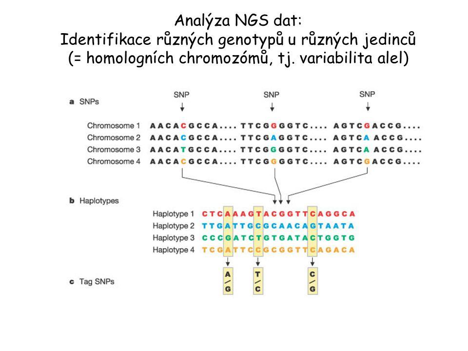 Analýza NGS dat: Identifikace různých genotypů u různých jedinců (= homologních chromozómů, tj. variabilita alel)