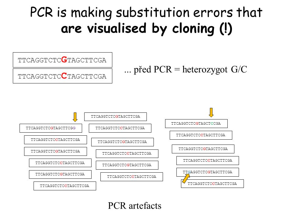 PCR is making substitution errors that are visualised by cloning (!) TTCAGGTCTC G TAGCTTCGA TTCAGGTCTC C TAGCTTCGA TTCAGGTCTC G TAGCTTCG G TTCAGGTCTC