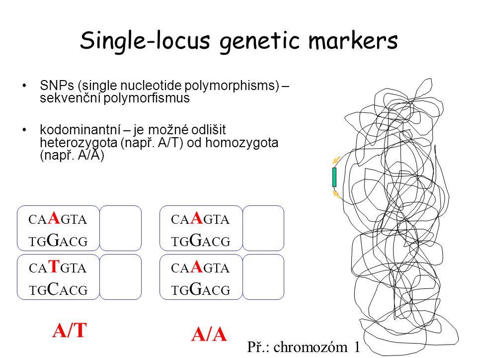 Single-locus genetic markers SNPs (single nucleotide polymorphisms) – sekvenční polymorfismus kodominantní – je možné odlišit heterozygota (např. A/T)