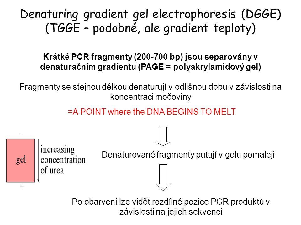 Denaturing gradient gel electrophoresis (DGGE) (TGGE – podobné, ale gradient teploty) Krátké PCR fragmenty (200-700 bp) jsou separovány v denaturačním