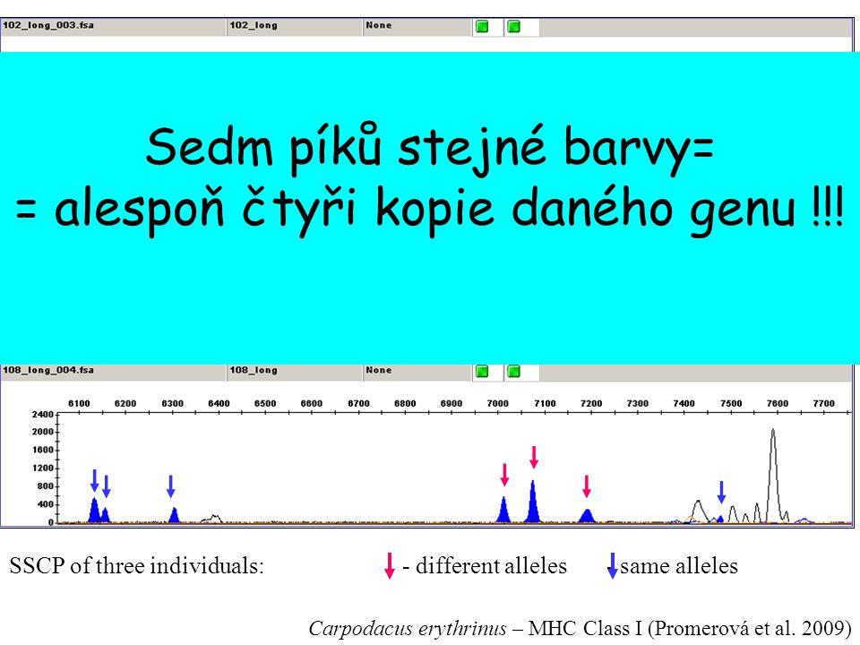 SSCP of three individuals:- different alleles - same alleles Carpodacus erythrinus – MHC Class I (Promerová et al. 2009) Sedm píků stejné barvy= = ale