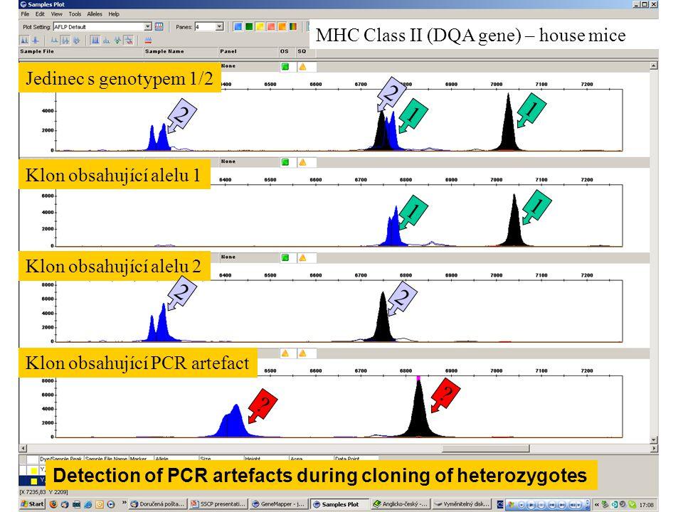 Jedinec s genotypem 1/2 Klon obsahující alelu 1 Klon obsahující alelu 2 Klon obsahující PCR artefact 2 2 2 2 1 1 1 1 ? ? MHC Class II (DQA gene) – hou