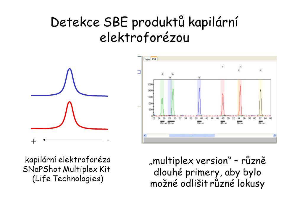 """Detekce SBE produktů kapilární elektroforézou + - kapilární elektroforéza SNaPShot Multiplex Kit (Life Technologies) """"multiplex version"""" – různě dlouh"""