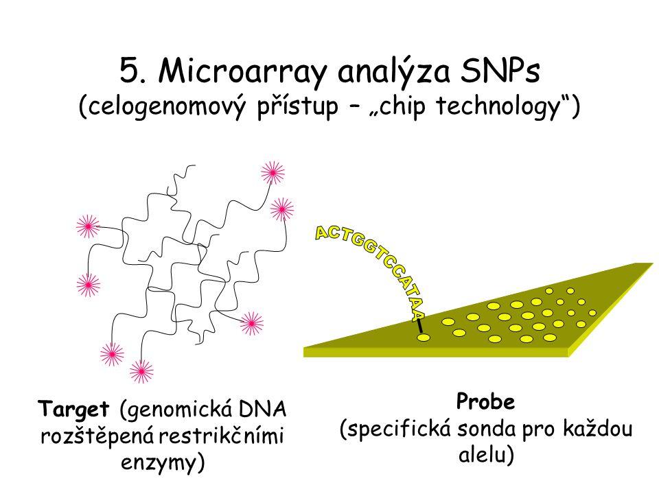 """5. Microarray analýza SNPs (celogenomový přístup – """"chip technology"""") Target (genomická DNA rozštěpená restrikčními enzymy) Probe (specifická sonda pr"""