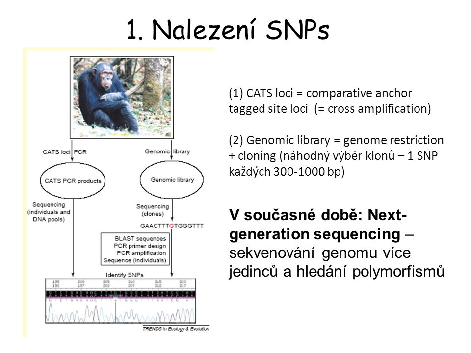 MHC Class II (DQA gene) – house mice 1 1 1 2 2 2 1 1 1 2 2 2 3 4 4 3 2 3 1 2 1 2 1 4...