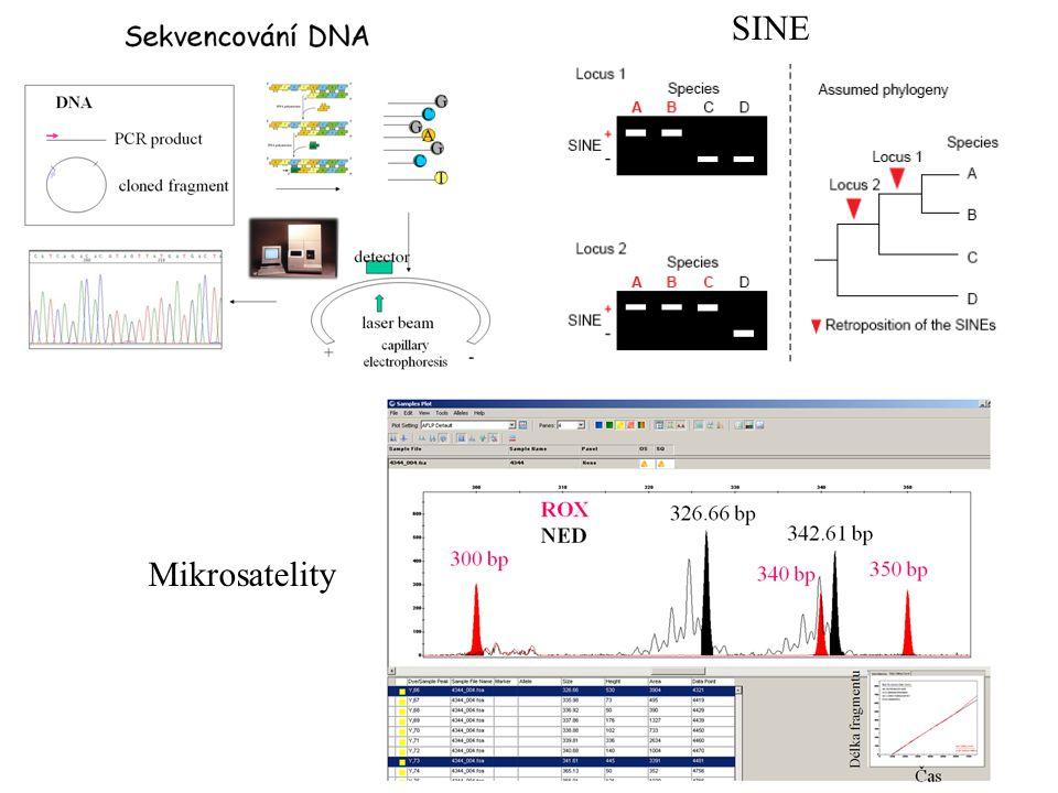 (3) SBE: single base extension CCGATCAATGCGGCAA CCGATCACTGCGGCAA T G - pouze jeden dideoxynukleotid je přidán k primeru - detekce různými metodami TG + -