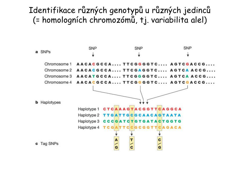 Identifikace různých genotypů u různých jedinců (= homologních chromozómů, tj. variabilita alel)