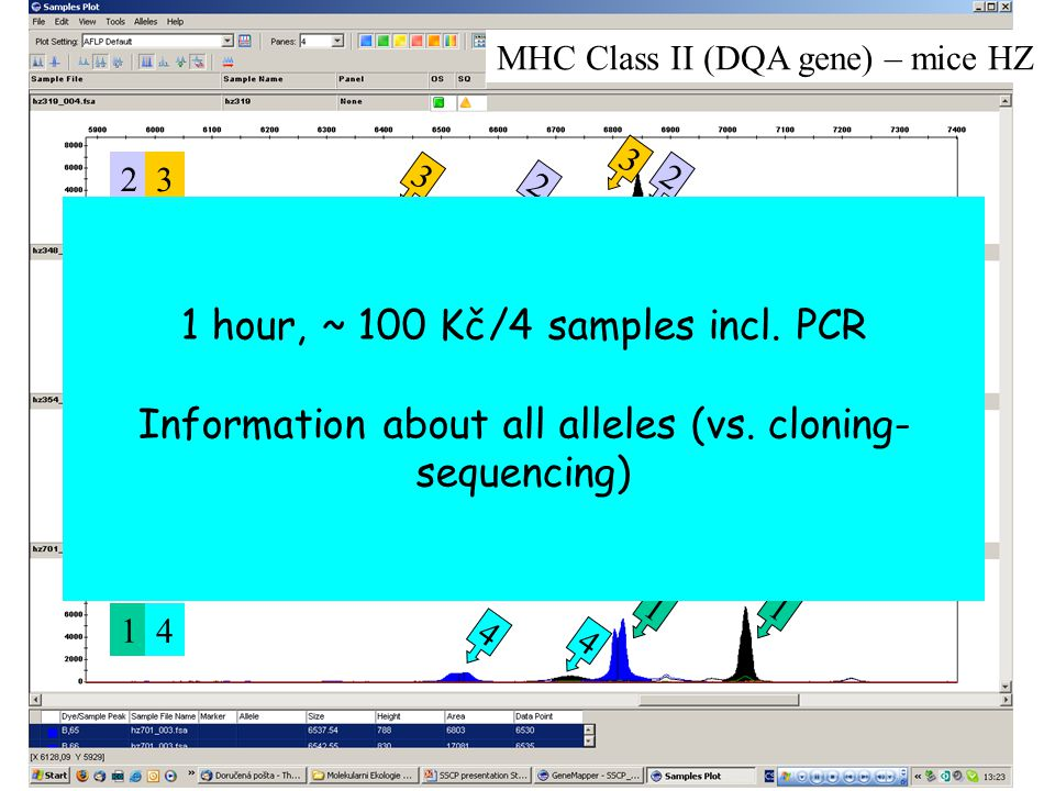 MHC Class II (DQA gene) – mice HZ 1 1 1 2 2 2 1 1 1 2 2 2 3 4 4 3 2 3 1 2 1 2 1 4 1 hour, ~ 100 Kč/4 samples incl.
