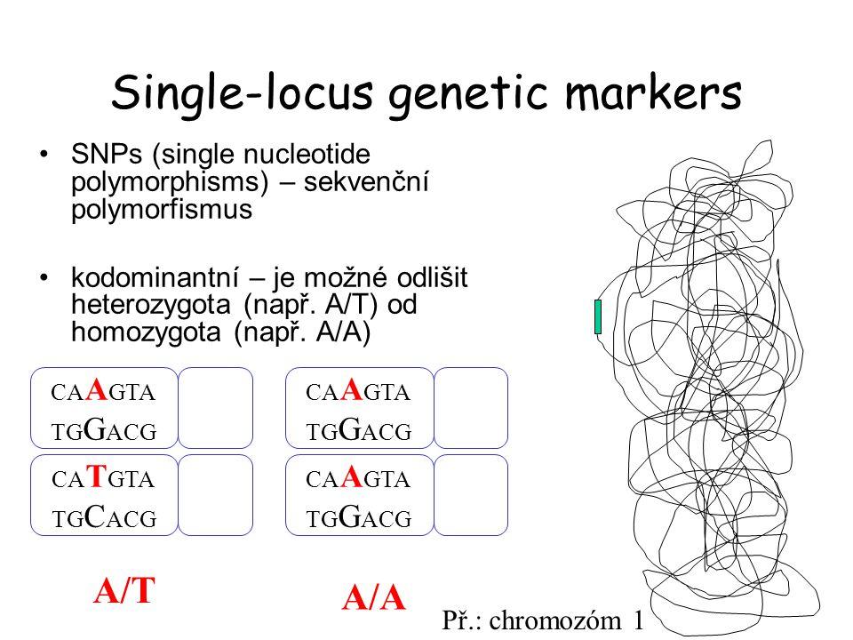 Příklad informativního SNP znaku transice A ↔ G transition: Pu  Pu or Py  Py transversion: Pu  Py or Py  Pu - fixovaný polymorfismus (homozygoti) – využití např.
