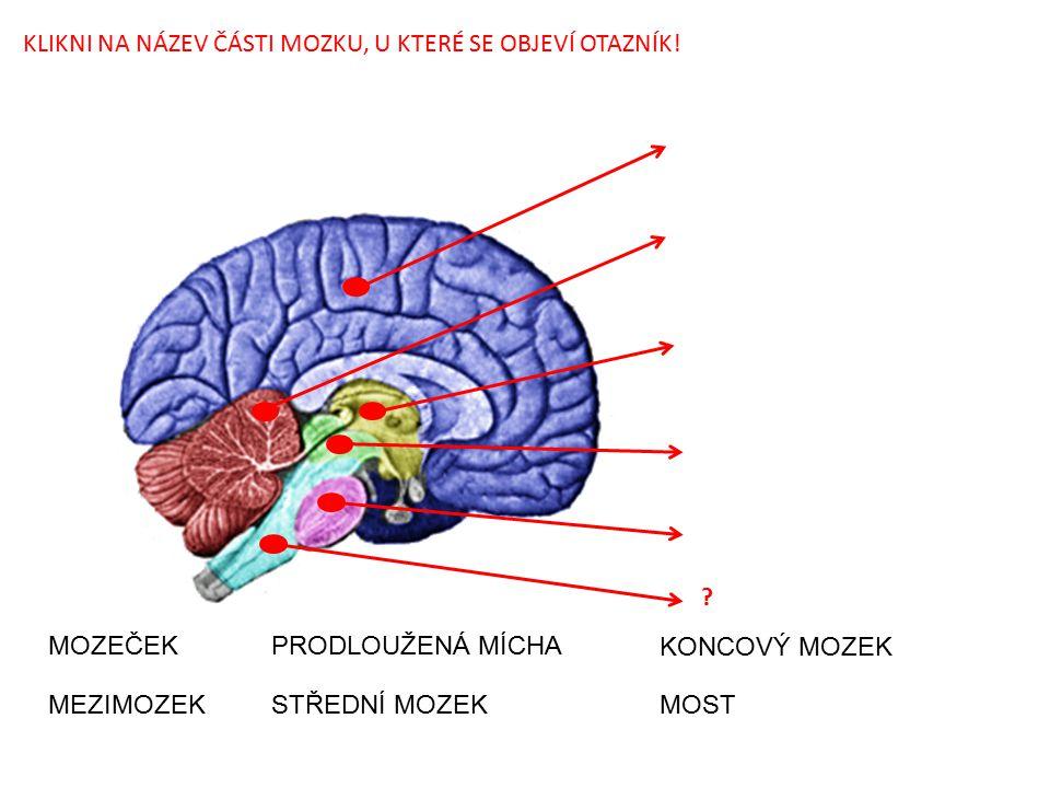 POUŽITÝ OBRÁZEK: File:Vertebrate-brain-regions small.png.