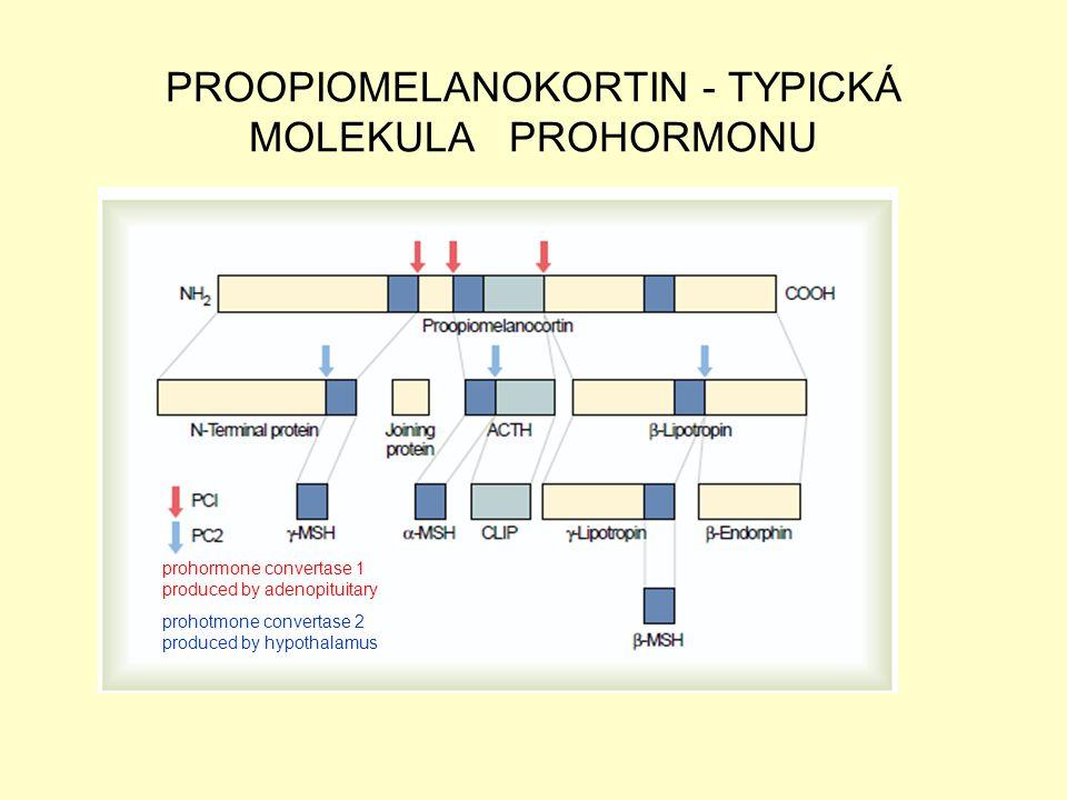 PROOPIOMELANOKORTIN - TYPICKÁ MOLEKULA PROHORMONU prohormone convertase 1 produced by adenopituitary prohotmone convertase 2 produced by hypothalamus