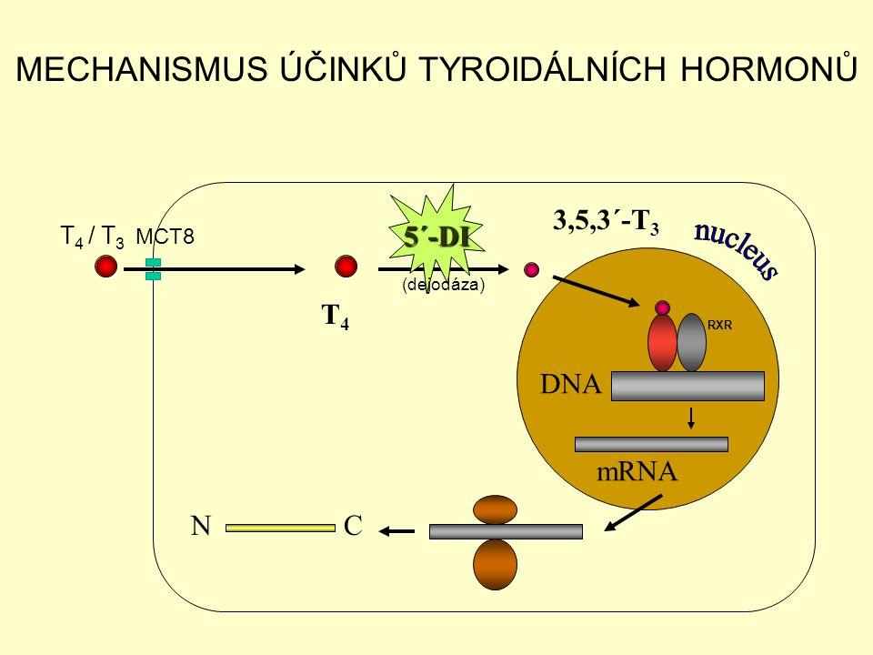 DNA mRNA N C T 4 3,5,3´-T 3 MECHANISMUS ÚČINKŮ TYROIDÁLNÍCH HORMONŮ 5´-DI (dejodáza) RXR T 4 / T 3 MCT8
