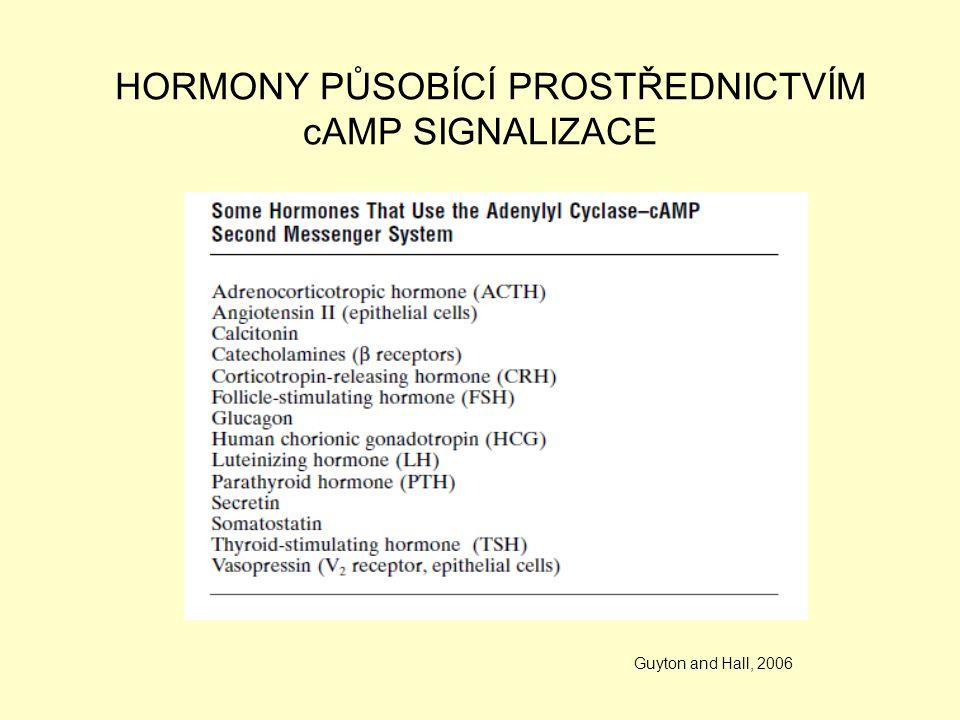 HORMONY PŮSOBÍCÍ PROSTŘEDNICTVÍM cAMP SIGNALIZACE Guyton and Hall, 2006