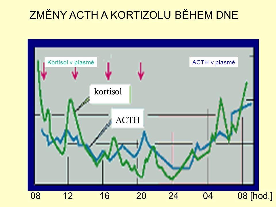 kortisol ACTH 240408 [hod.]20161208 Kortisol v plasmě ACTH v plasmě ZMĚNY ACTH A KORTIZOLU BĚHEM DNE