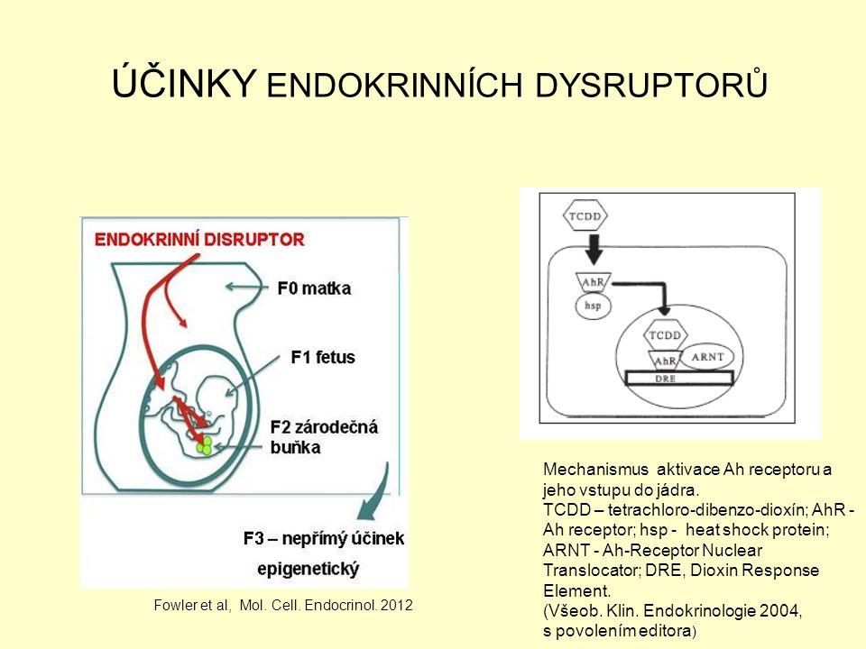 ÚČINKY ENDOKRINNÍCH DYSRUPTORŮ Mechanismus aktivace Ah receptoru a jeho vstupu do jádra. TCDD – tetrachloro-dibenzo-dioxín; AhR - Ah receptor; hsp - h