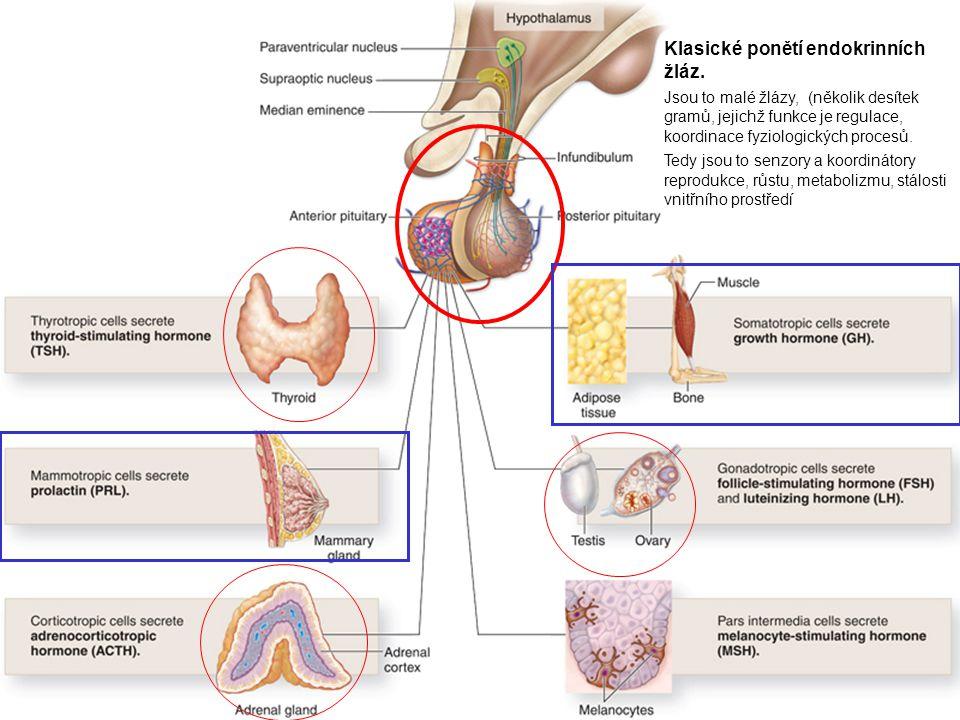 Klasické ponětí endokrinních žláz. Jsou to malé žlázy, (několik desítek gramů, jejichž funkce je regulace, koordinace fyziologických procesů. Tedy jso