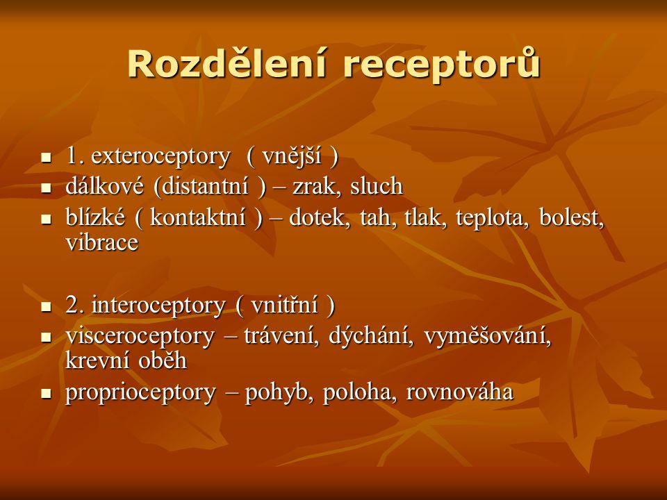 Rozdělení receptorů 1. exteroceptory ( vnější ) 1.