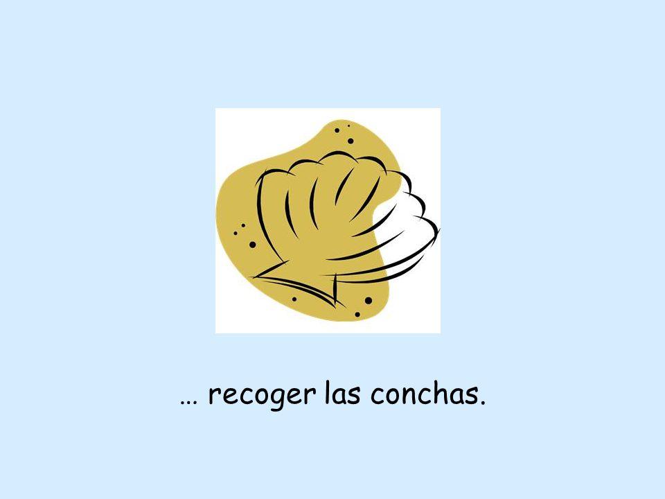 … recoger las conchas.