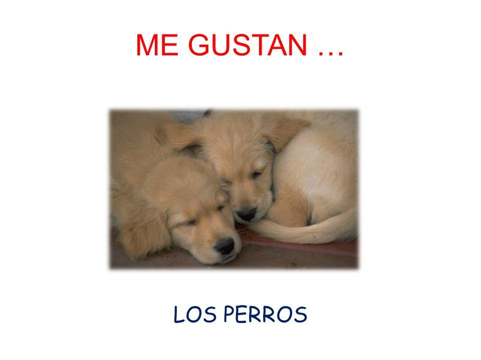 ME GUSTAN … LOS PERROS
