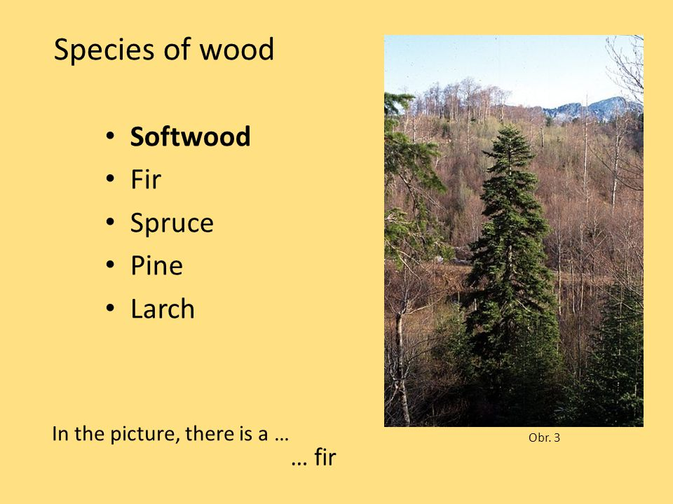 Species of wood Softwood Fir Spruce Pine Larch Obr. 3 In the picture, there is a … … fir