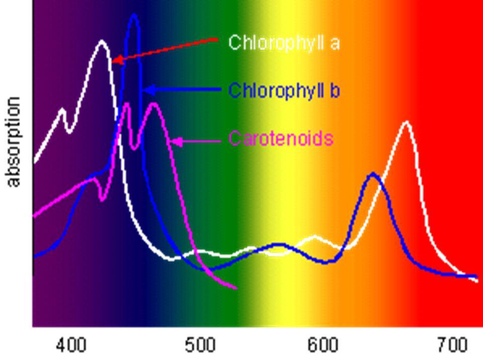 Absorpce PAR chloroplasty