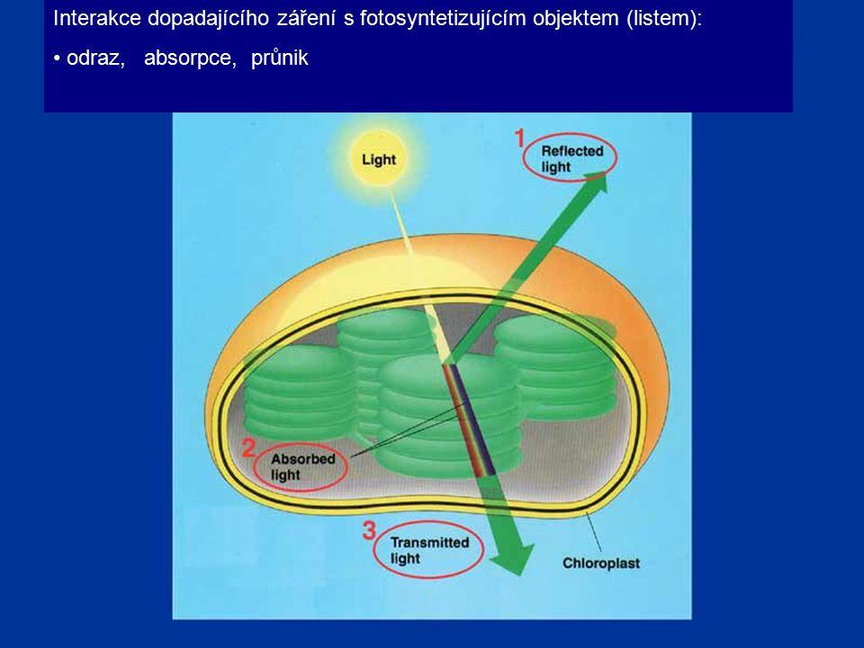 Interakce dopadajícího záření s fotosyntetizujícím objektem (listem): odraz, absorpce, průnik