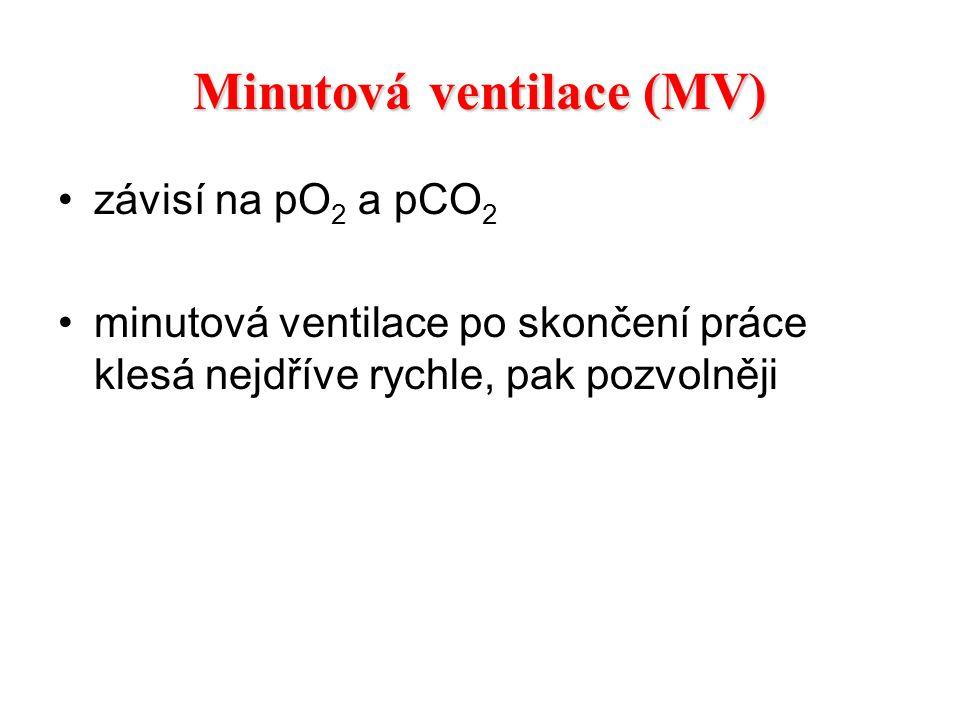 Minutová ventilace (MV) závisí na pO 2 a pCO 2 minutová ventilace po skončení práce klesá nejdříve rychle, pak pozvolněji