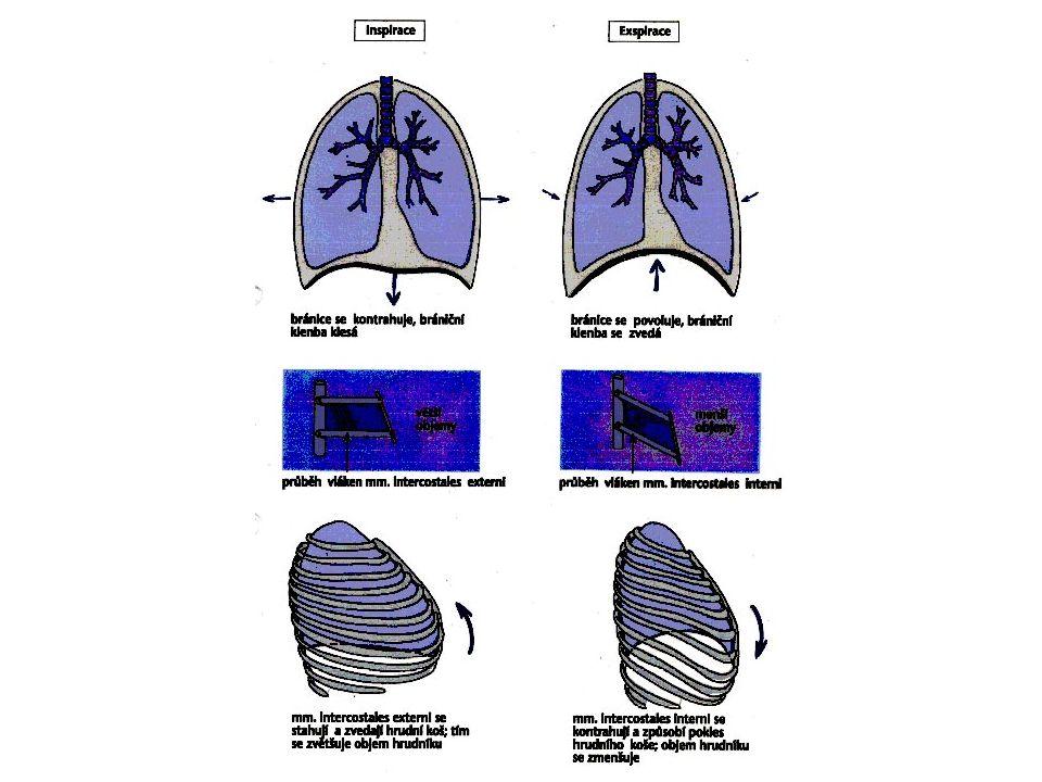 Základní pojmy Dechová frekvence (DF) Dechový objem (DO) Minutová ventilace (MV) Maximální minutová ventilace (MMV) Vitální kapacita (VC) –IRV, ERV, DO, RV