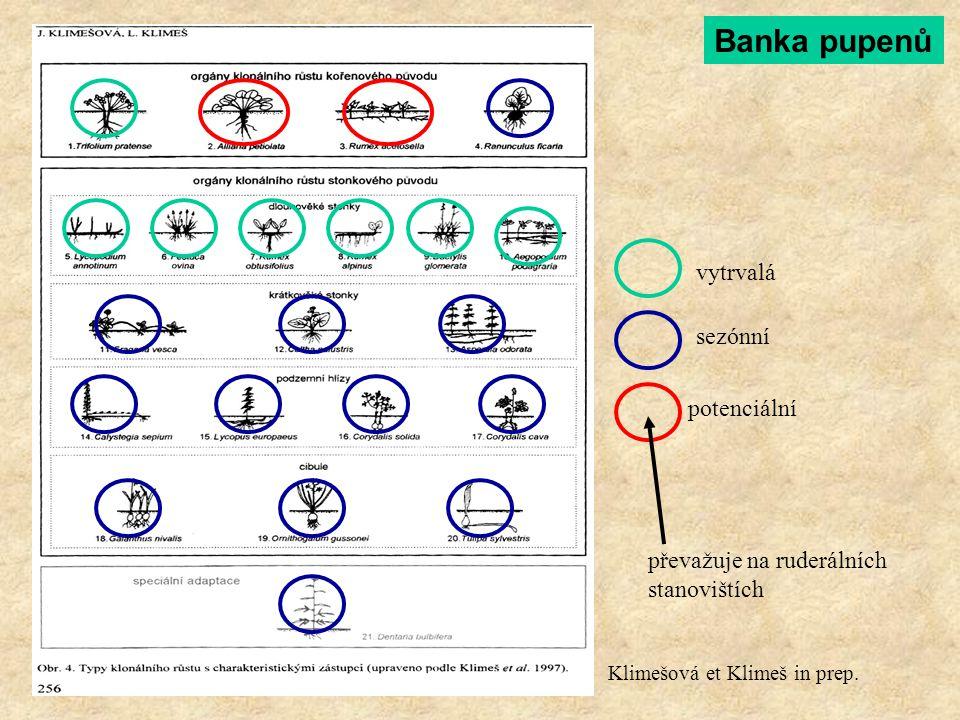 Banka pupenů vytrvalá sezónní potenciální převažuje na ruderálních stanovištích Klimešová et Klimeš in prep.