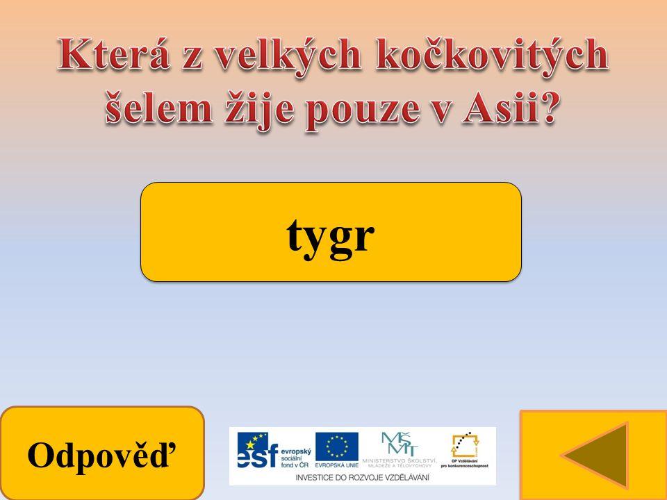 Odpověď tygr