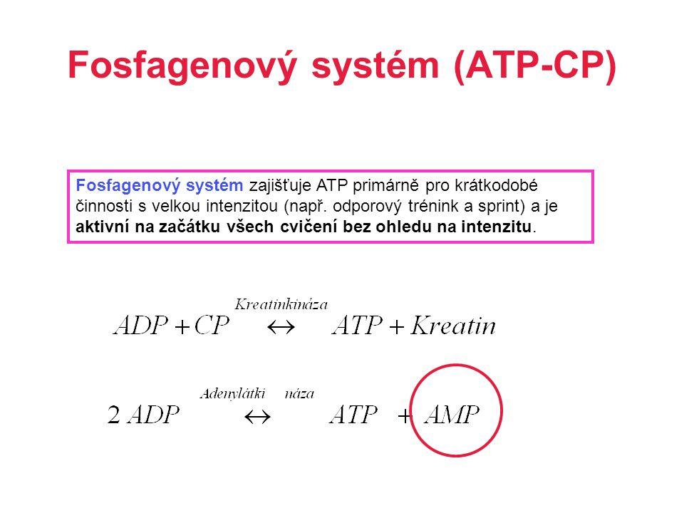 Fosfagenový systém (ATP-CP) Fosfagenový systém zajišťuje ATP primárně pro krátkodobé činnosti s velkou intenzitou (např. odporový trénink a sprint) a