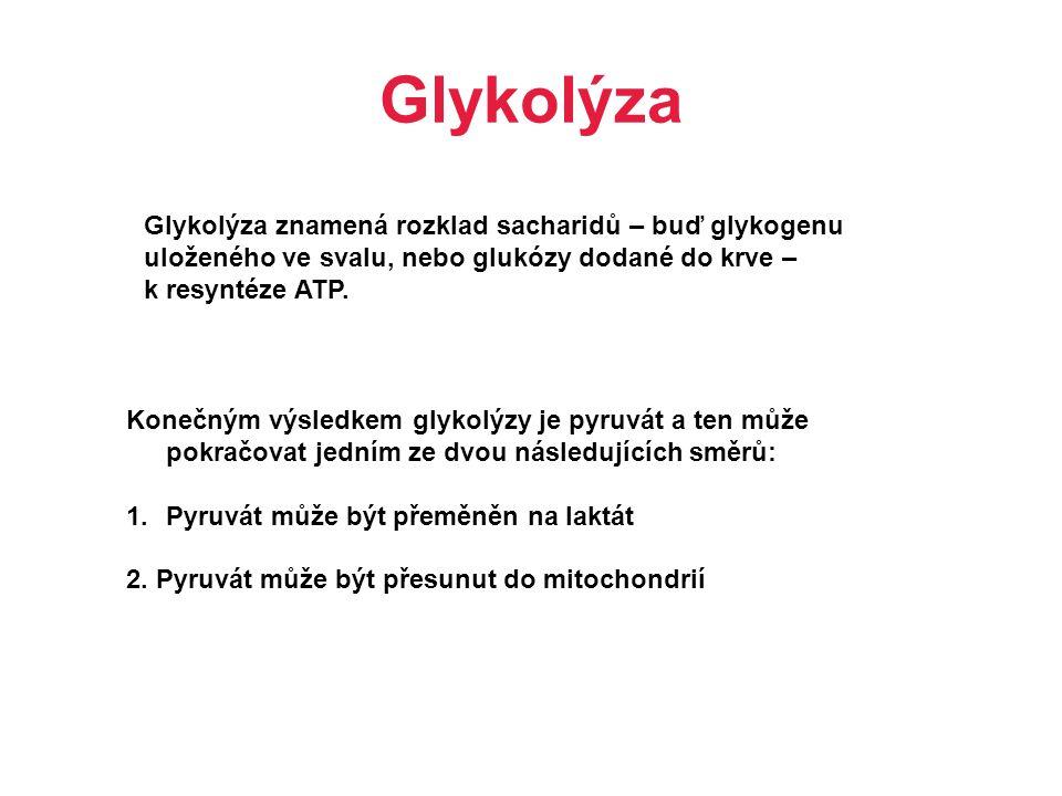 Glykolýza Glykolýza znamená rozklad sacharidů – buď glykogenu uloženého ve svalu, nebo glukózy dodané do krve – k resyntéze ATP. Konečným výsledkem gl
