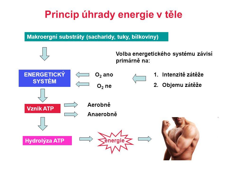 Princip úhrady energie v těle Makroergní substráty (sacharidy, tuky, bílkoviny) ENERGETICKÝ SYSTÉM Volba energetického systému závisí primárně na: 1.I