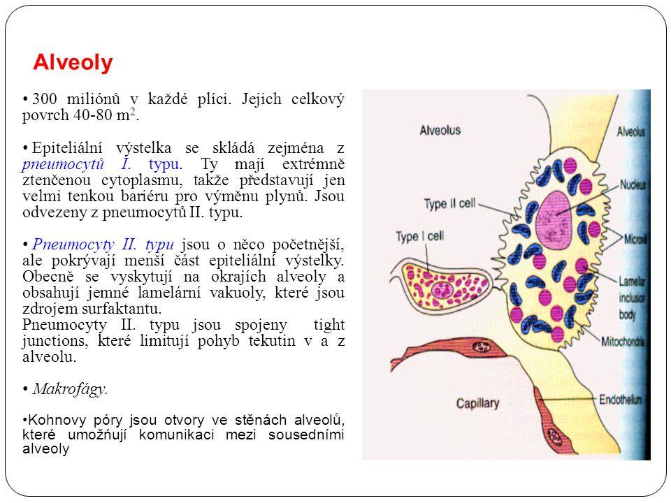 Alveoly 300 miliónů v každé plíci. Jejich celkový povrch 40-80 m 2. Epiteliální výstelka se skládá zejména z pneumocytů I. typu. Ty mají extrémně zten