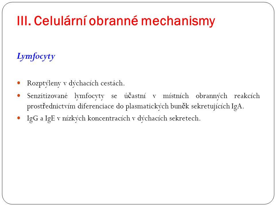 III. Celulární obranné mechanismy Lymfocyty Rozptýleny v dýchacích cestách. Senzitizované lymfocyty se ú č astní v místních obranných reakcích prost ř