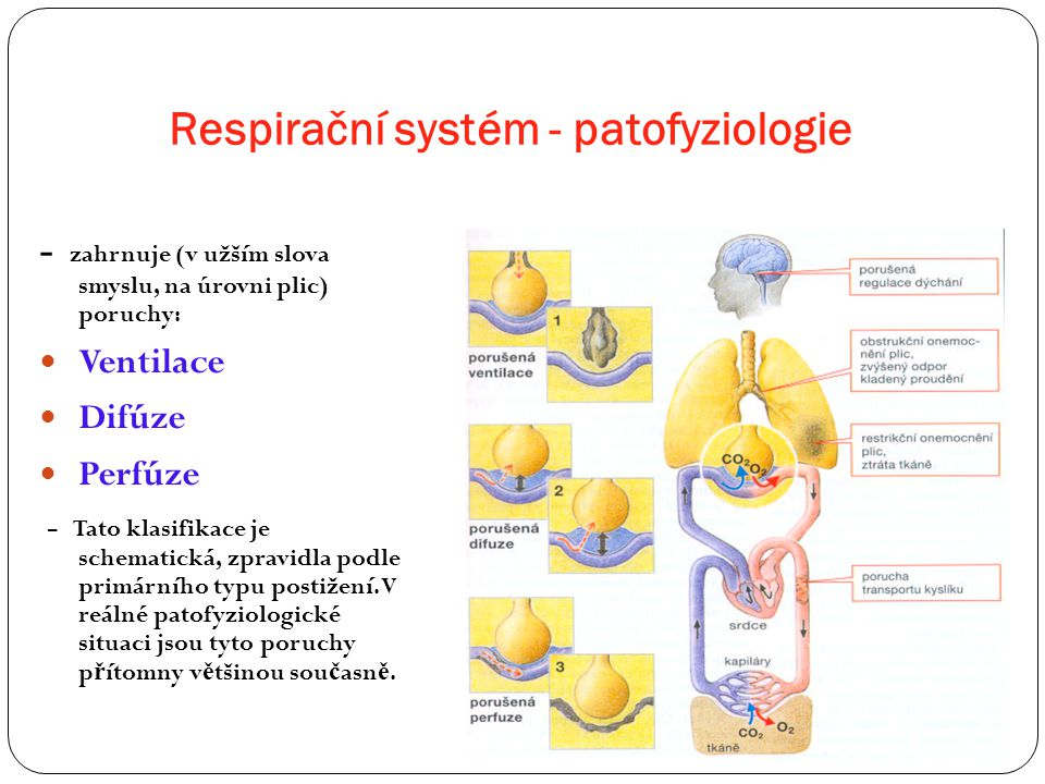 Respirační systém - patofyziologie - zahrnuje (v užším slova smyslu, na úrovni plic) poruchy: Ventilace Difúze Perfúze - Tato klasifikace je schematic