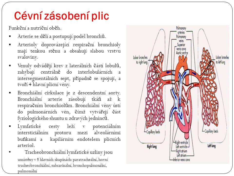 Cévní zásobení plic Funk č ní a nutri č ní ob ě h.  Arterie se d ě lí a postupují podél bronch ů.  Arterioly doprovázející respira č ní bronchioly m