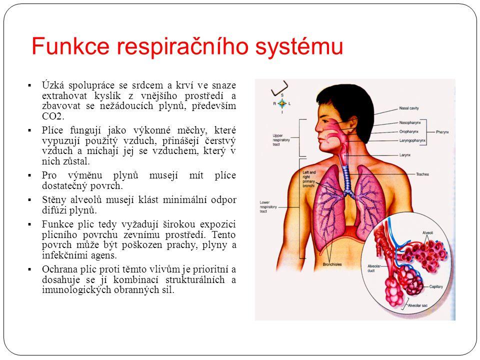 Funkce respiračního systému  Úzká spolupráce se srdcem a krví ve snaze extrahovat kyslík z vnějšího prostředí a zbavovat se nežádoucích plynů, předev