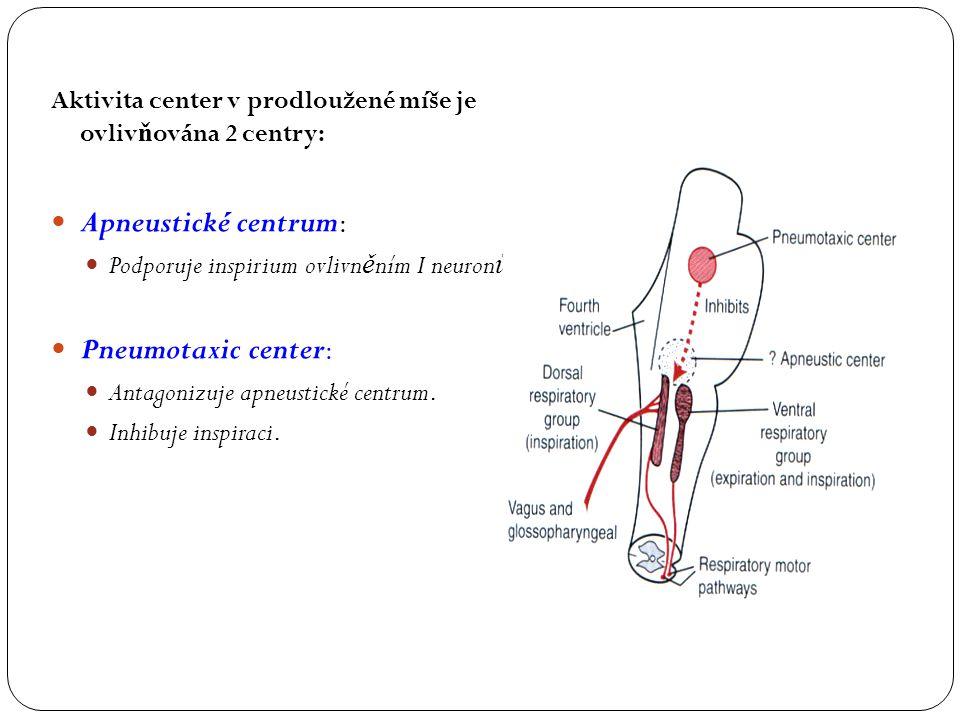 Aktivita center v prodloužené míše je ovliv ň ována 2 centry: Apneustické centrum: Podporuje inspirium ovlivn ě ním I neuron ů Pneumotaxic center: Ant
