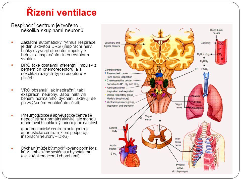 Řízení ventilace Respirační centrum je tvořeno několika skupinami neuronů Základní automatický rytmus respirace je dán aktivitou DRG (inspirační nerv.