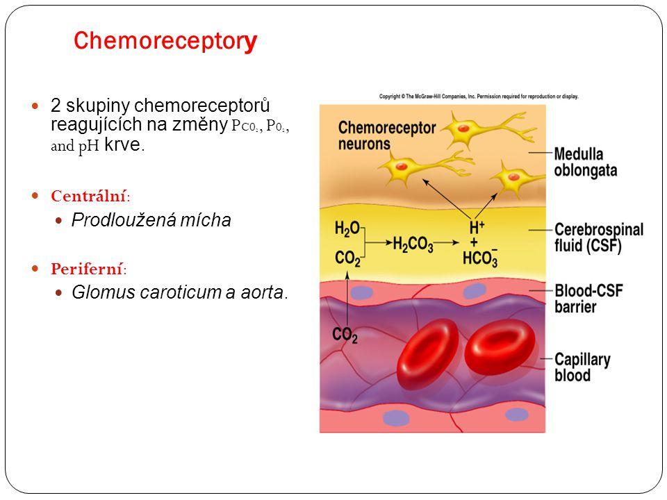Chemoreceptor y Insert fig. 16.27 2 skupiny chemoreceptorů reagujících na změny P C0 2, P 0 2, and pH krve. Centrální: Prodloužená mícha Periferní: Gl
