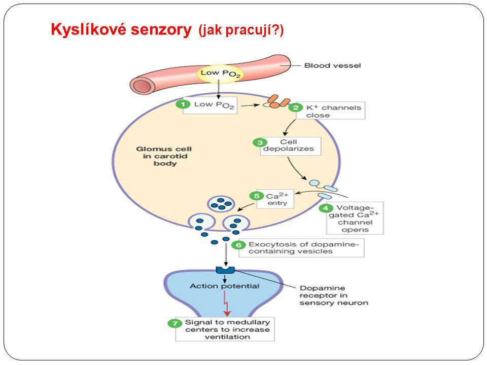 Kyslíkové senzory (jak pracují?)