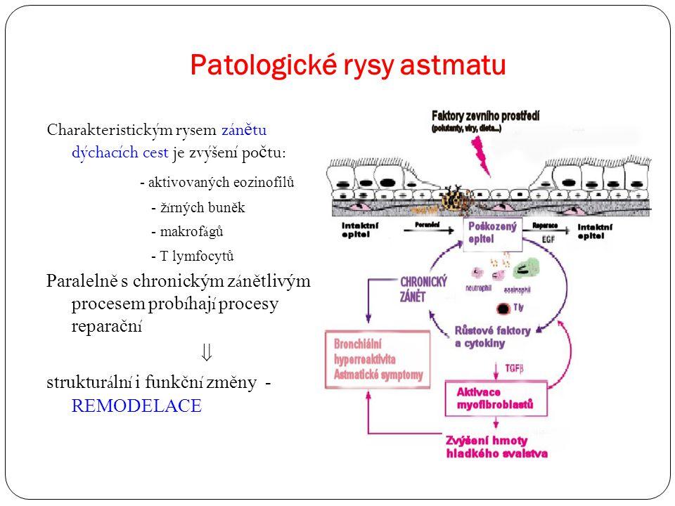 Patologické rysy astmatu Charakteristickým rysem zán ě tu dýchacích cest je zvýšení po č tu: - aktivovaných eozinofilů - ž í rných buněk - makrof á gů