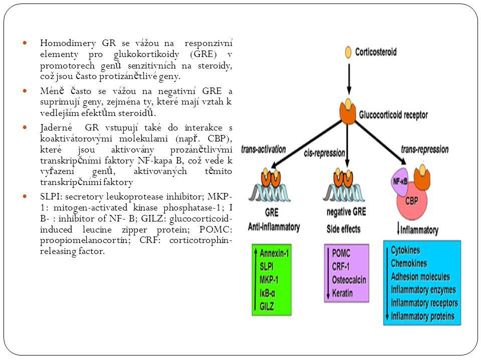 Homodimery GR se vážou na responzivní elementy pro glukokortikoidy (GRE) v promotorech gen ů senzitivních na steroidy, což jsou č asto protizán ě tliv
