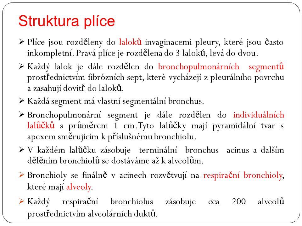 Struktura plíce  Plíce jsou rozd ě leny do lalok ů invaginacemi pleury, které jsou č asto inkompletní. Pravá plíce je rozd ě lena do 3 lalok ů, levá