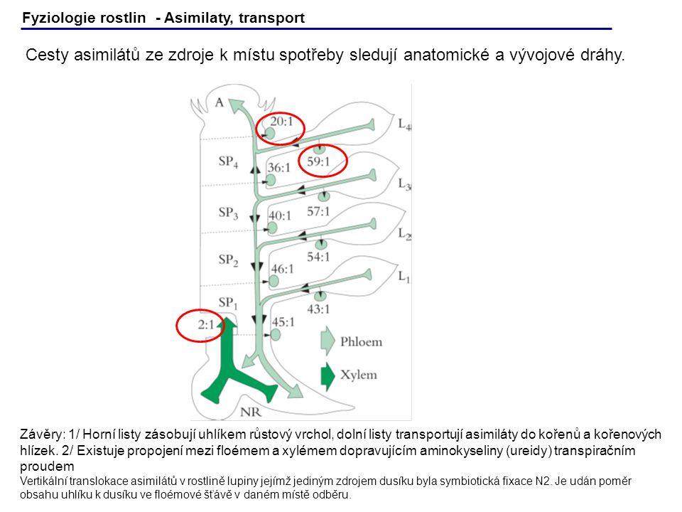 Fyziologie rostlin - Asimilaty, transport Cesty asimilátů ze zdroje k místu spotřeby sledují anatomické a vývojové dráhy. Závěry: 1/ Horní listy zásob